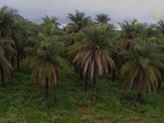 Green Fuels e INOCAS acuerdan colaboración con Brasil