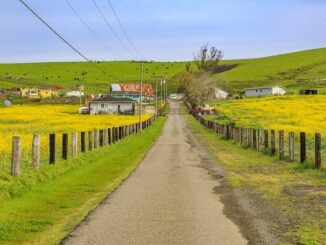 ¿Hay disminución de la demanda de colza para la producción de biocombustibles?