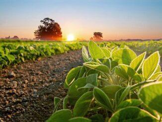 T&E plantea preocupaciones sobre el biodiésel del cultivo de soja