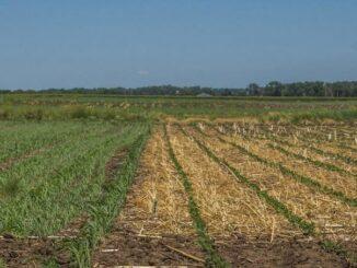 El potencial del etanol a base de maíz está significativamente para reducir GEI por debajo de las estimaciones actuales
