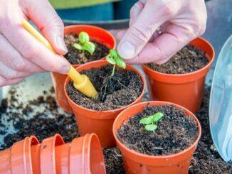 Para ser sostenible es importante utilizar compost sin turba